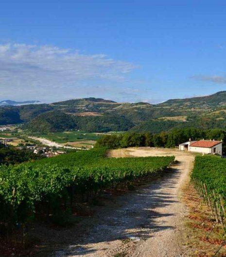 TASI Organic wine - Vine - Vigne - Gustorotondo - Italian food boutique