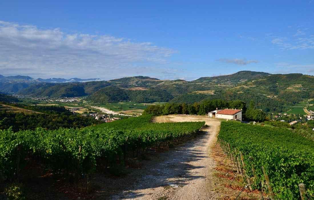 TASI Organic wine – Vine – Vigne – Gustorotondo – Italian food boutique