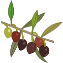 olio extravergine di oliva icona - extra virgin olive oil evo oil icon - Gustorotondo - Italian food boutique