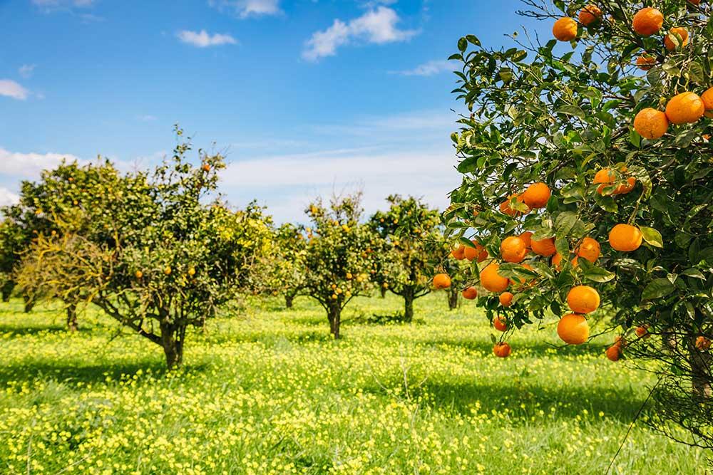 Prodotti da agricoltura biodinamica. Curiosità e benefici
