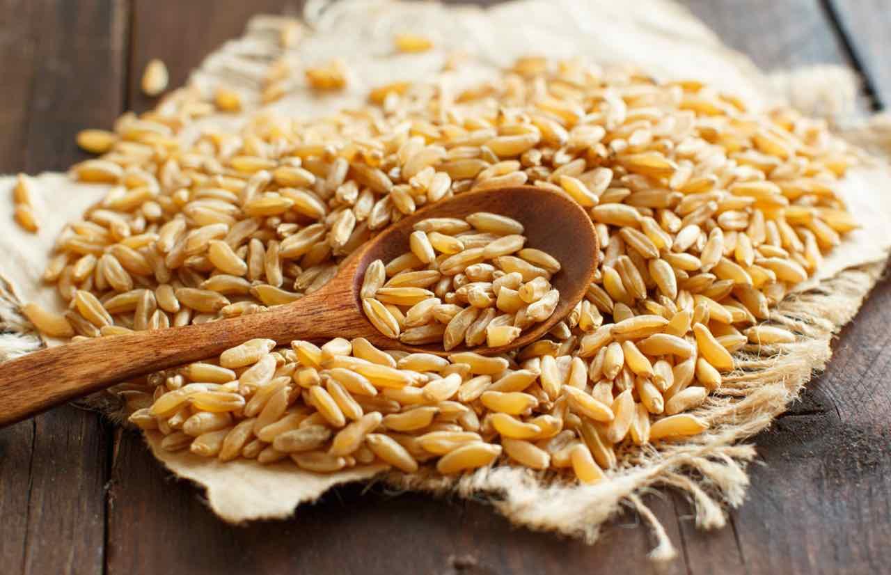 Khorasan Kamut chicchi di grano - Khorasan Kamut grains- Gustorotondo - cibo artigianale italiano - Italian food boutique