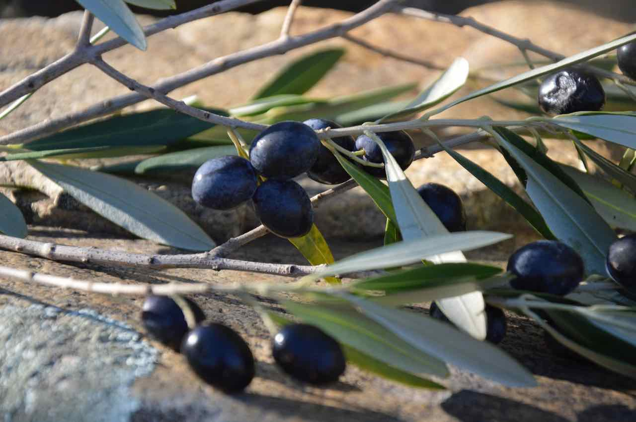 olive nere - black olives - Gustorotondo - Italian food boutique - spesa online - online food shopping