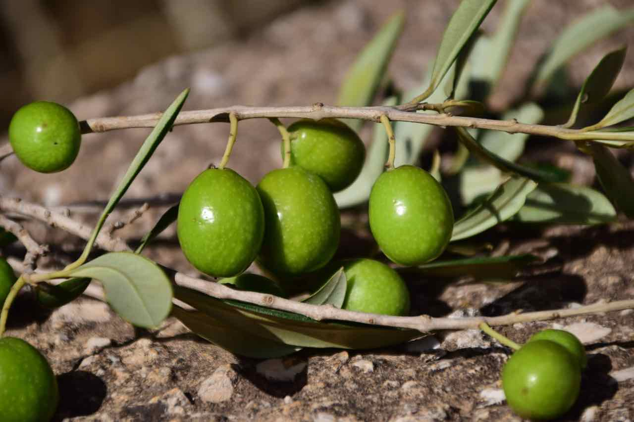 olive verdi - green olives - Gustorotondo - Italian food boutique - spesa online - online food shopping