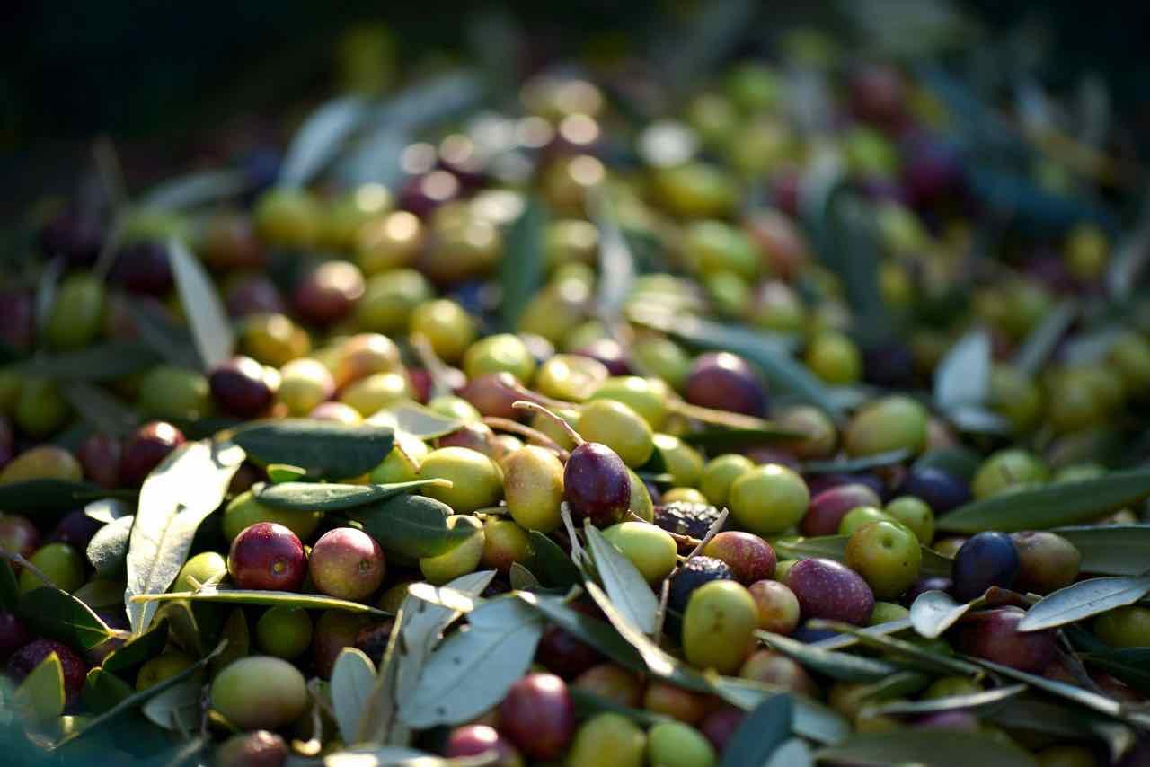 olive - olives - Gustorotondo Italian food boutique - I migliori cibi online - Best Italian food online