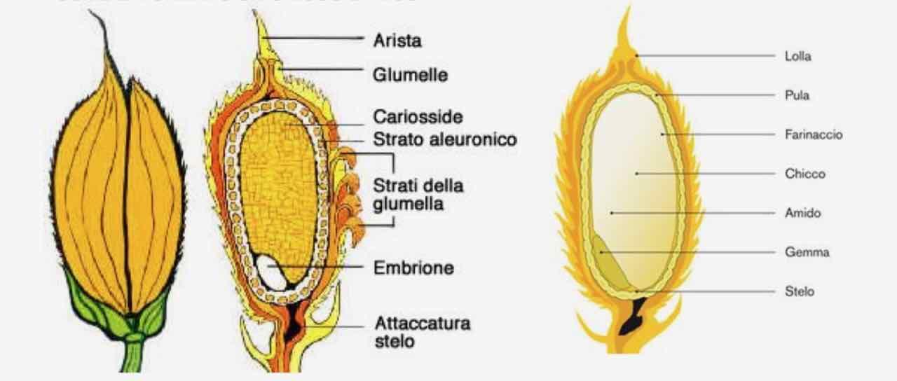 riso - rice - Gustorotondo Italian food boutique - I migliori cibi online - Best Italian food online - spesa online