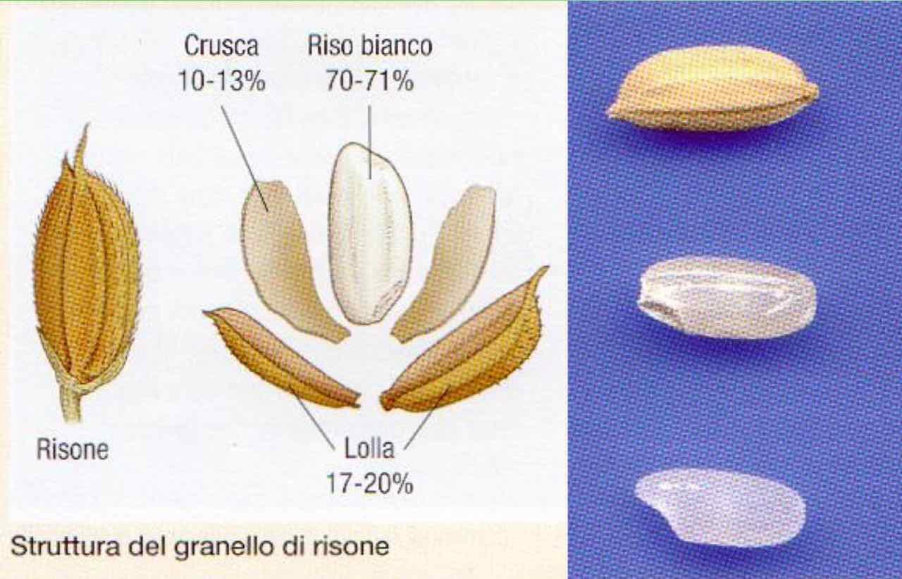 Fonte: Università di Milano, corso Dr. Pecetti (11)