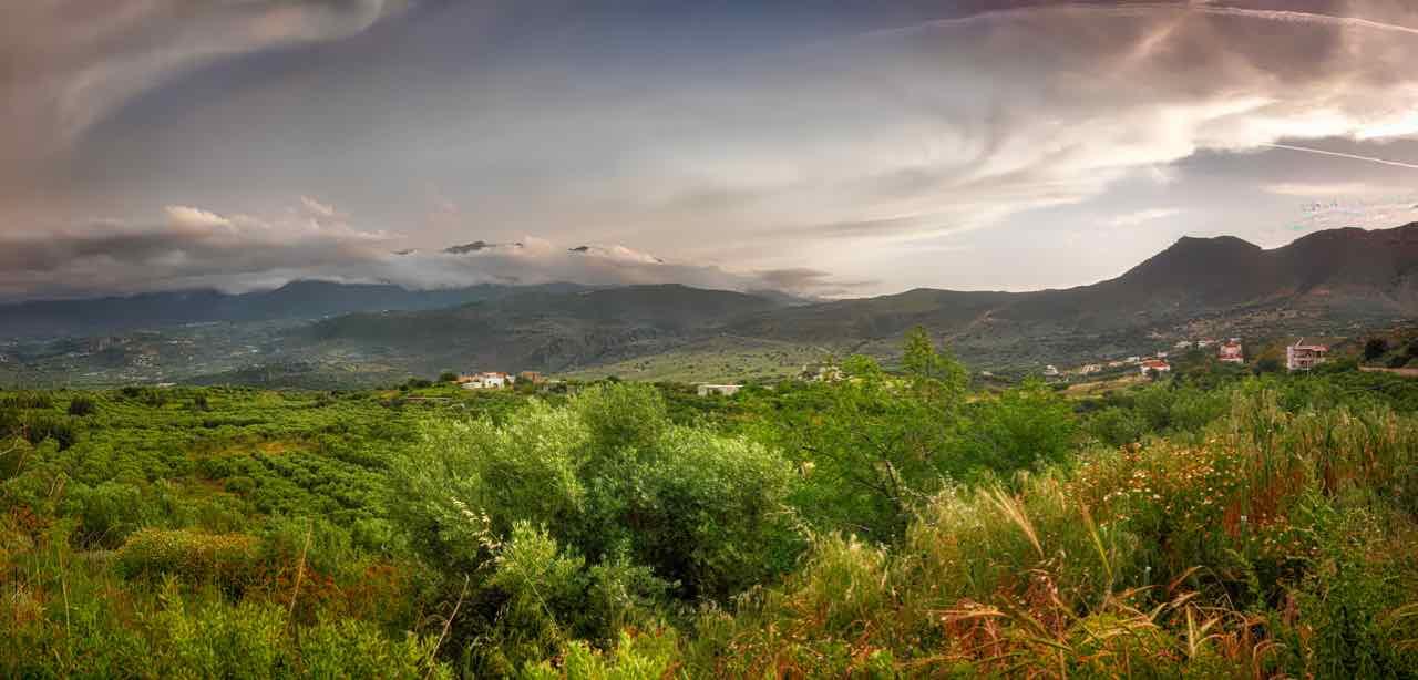 creta panorama olivi - creta sightseeing olive trees - Gustorotondo Italian food boutique - I migliori cibi online - Best Italian food online - spesa online