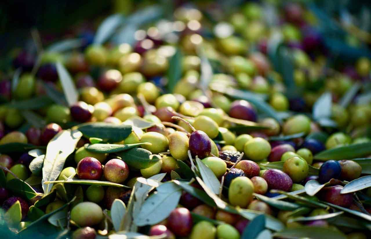 Acidità olio extravergine di oliva - Gustorotondo Italian food boutique - I migliori cibi online - Best Italian foods online - spesa online
