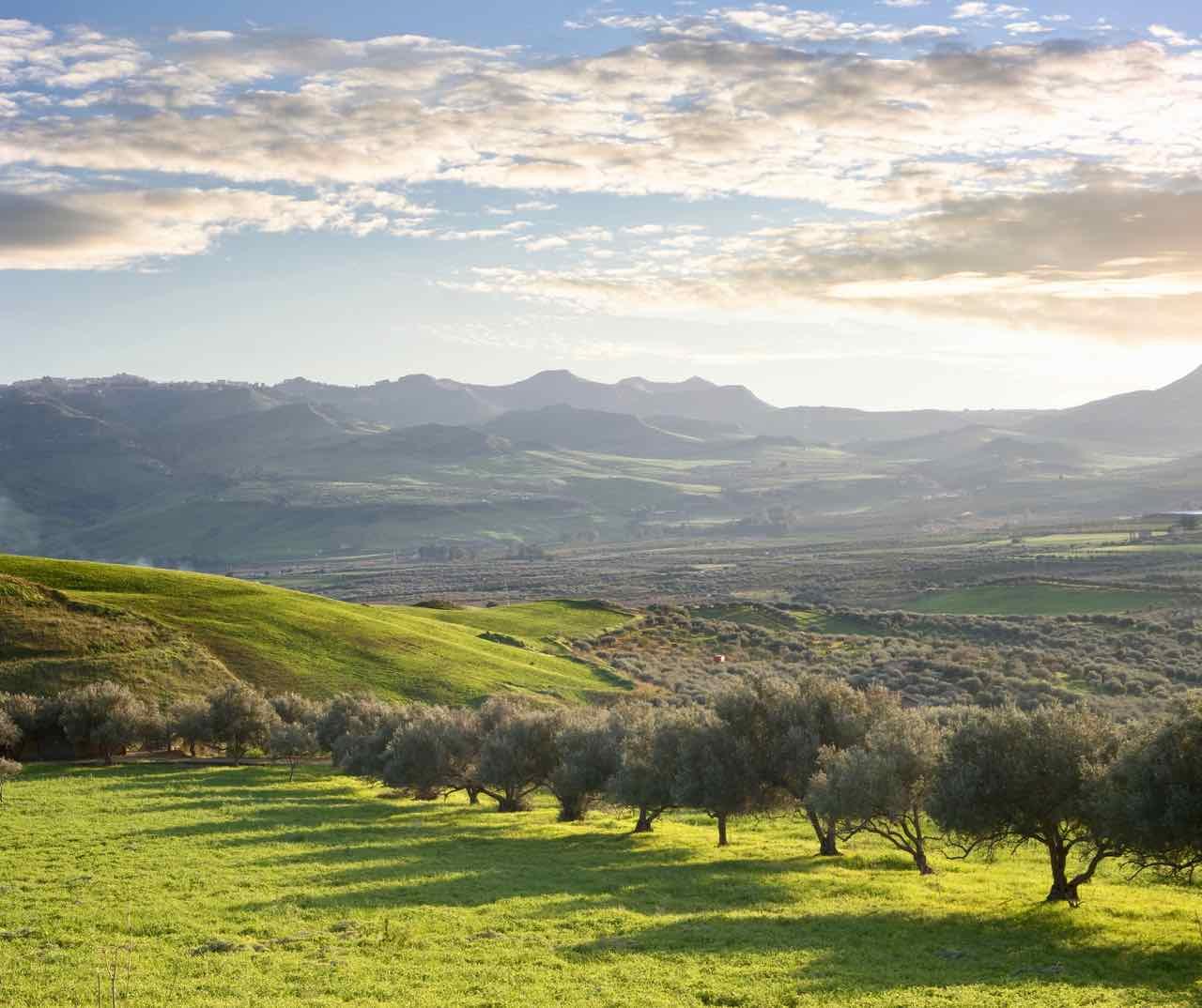 olio extravergine di oliva siciliano -evo oil from Sicily - Gustorotondo Italian food boutique - I migliori cibi online - Best Italian foods online - spesa online