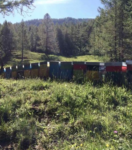 miele Apicoltura Vallera - apiari - Gustorotondo - spesa online