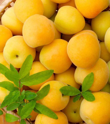 albicocche-confettura - Gustorotondo