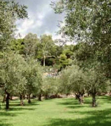 olio-extravergine-tuscanese-02 - Gustorotondo