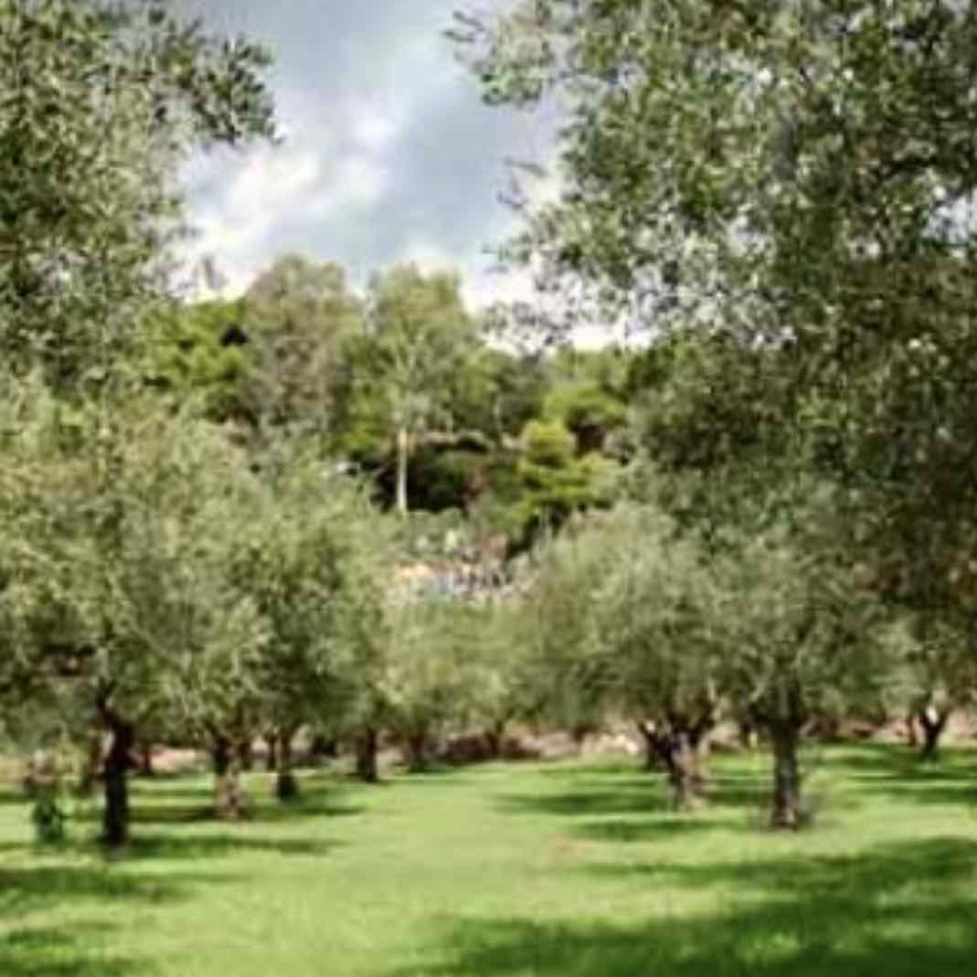 olio-extravergine-tuscanese-02 – Gustorotondo