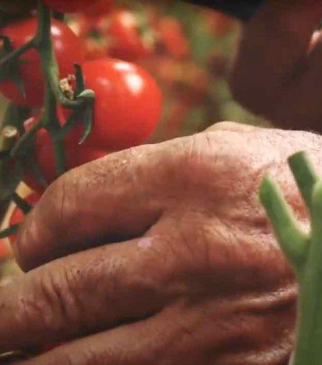 Pomodorini-De-Carlo - Gustorotondo - spesa online
