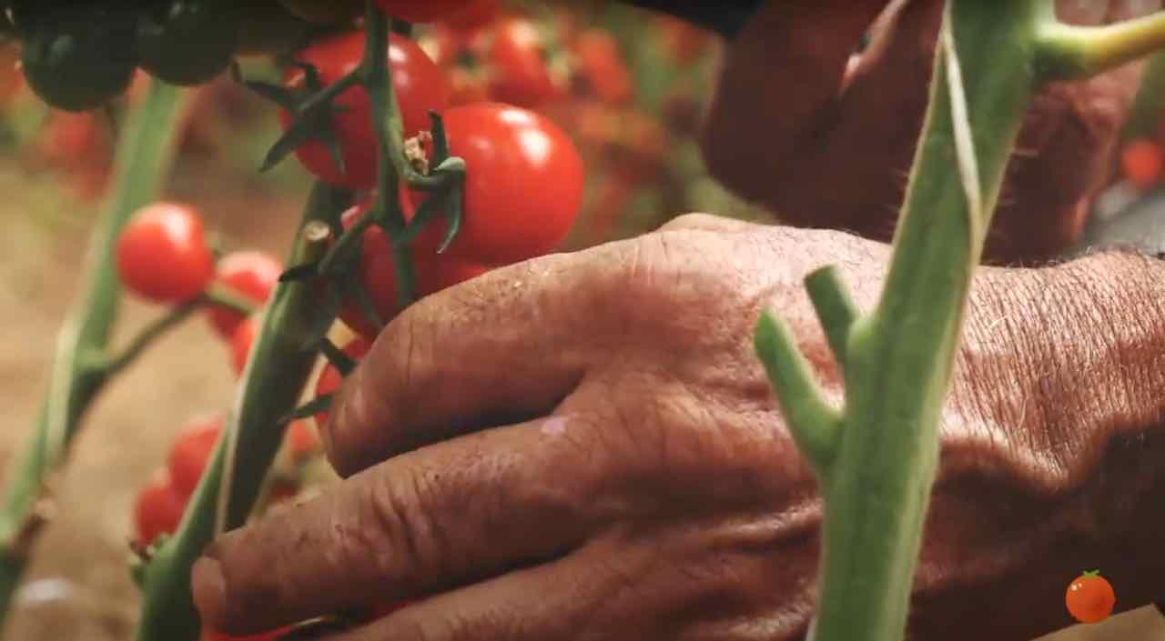 Pomodorini-De-Carlo – Gustorotondo – spesa online